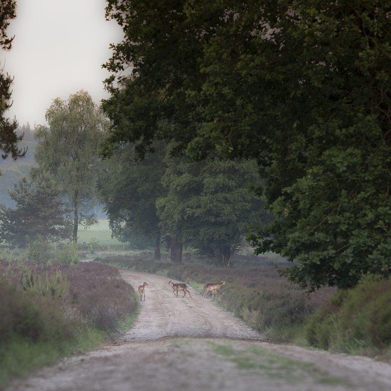 WillemienvandenBroek-0713